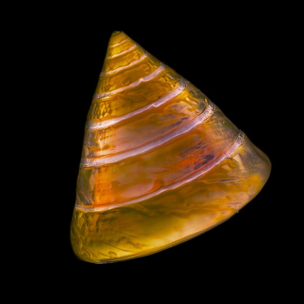 Cretean Snail © Julian Köpke